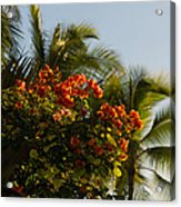 Bougainvilleas And Palm Trees Swaying In The Wind In Waikiki Honolulu Hawaii Acrylic Print