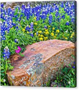 Boulder And Bluebonnets Acrylic Print by Thomas Pettengill