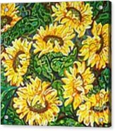 Bountiful Sunflowers Acrylic Print