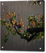Bouquet From Autumn Leaves.three. Acrylic Print