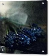 Bouquet Of Grape Hyiacints On The Dark Textured Surface Acrylic Print