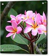 Bouquet Of Pink Plumeria Acrylic Print