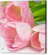 Bouquet Of Pink Tulips. Acrylic Print