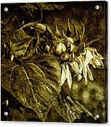 Bowed Not Broken Acrylic Print