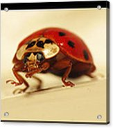 Bowing Ladybug . Art And Frame Print Only Acrylic Print