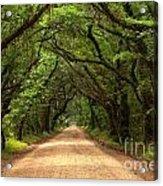Bowing Oak Trees Acrylic Print