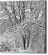 Bowing To Winter Acrylic Print