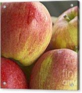 Bowl Of Royal Gala Apples Acrylic Print