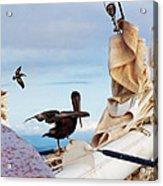Bowsprit Pelicans Acrylic Print