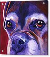 Boxer - Wallace Acrylic Print by Alicia VanNoy Call