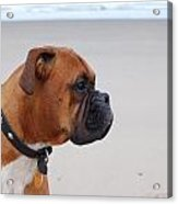 Boxer By The Sea Acrylic Print
