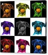 Boxer Mix Dog Art - 8173 - V1 - M Acrylic Print