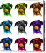Boxer Mix Dog Art - 8173 - Wb - M Acrylic Print