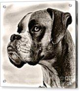 Boxer Profile Acrylic Print
