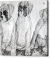 Boxer Puppy Dog Poster Print Acrylic Print by Olde Time  Mercantile