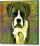 Boxer Three 20130126 Acrylic Print by Wingsdomain Art and Photography