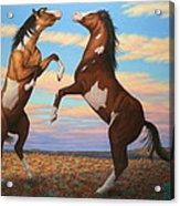 Boxing Horses Acrylic Print