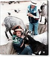Boys Feeding Hungry Goats  Acrylic Print