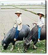 Boys On Water Buffalo In Countryside-vietnam Acrylic Print
