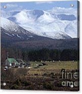 Braeriach From Whitewell Acrylic Print