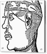 Brain Diagram, 1503 Acrylic Print
