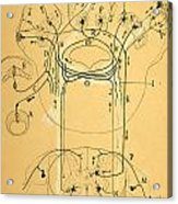 Brain Vestibular Sensor Connections By Cajal 1899 Acrylic Print