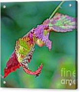 Bramble Leaves Acrylic Print