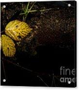 Bramble Tree Acrylic Print