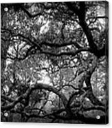 Branch Out Acrylic Print