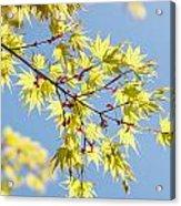 Branche In Springtime Acrylic Print