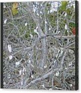 Branches 1 Acrylic Print