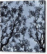 Branches Across Acrylic Print