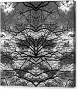 Branches And Clouds Mirrored Acrylic Print