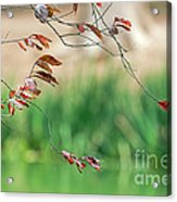 Branches And Leaves Acrylic Print
