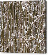 Branches And Twigs Covered In Fresh Snow Acrylic Print