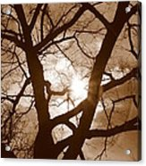 Branches In The Dark 2 Acrylic Print