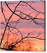 Branches Meet The Sky Acrylic Print