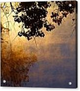 Branches Misty Pond Sunrise Acrylic Print