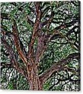 Branches Of Brio Acrylic Print