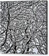 Branches Of Our Life Acrylic Print
