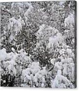 Branches Of Snow Acrylic Print