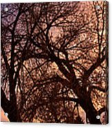 Branching Out At Sunset Acrylic Print
