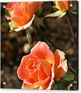 Brass Band Roses In Autumn Acrylic Print