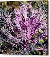 Brassica Acrylic Print