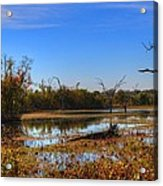 Brazos Bend Swamp Acrylic Print