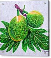 Bread Fruit Acrylic Print