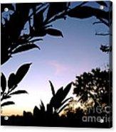 Breaking Dawn Acrylic Print