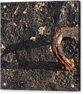 Breakwater At Crete Harbor   #7102 Acrylic Print