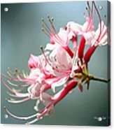 Breathtaking Beauty Acrylic Print