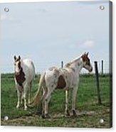 Breed Horses Acrylic Print